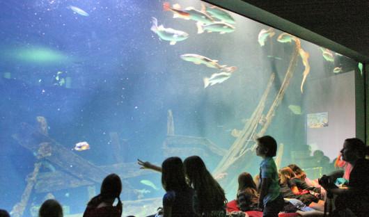 Aquarium2945