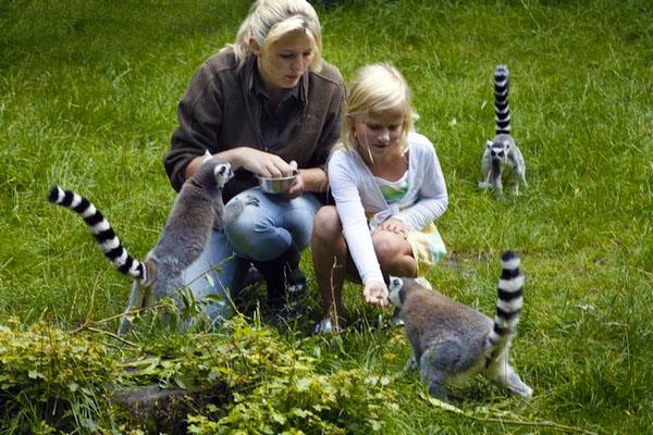 dierenpark de wissel